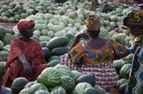 Article : Liberté économique des pays africains : où en sommes-nous ?